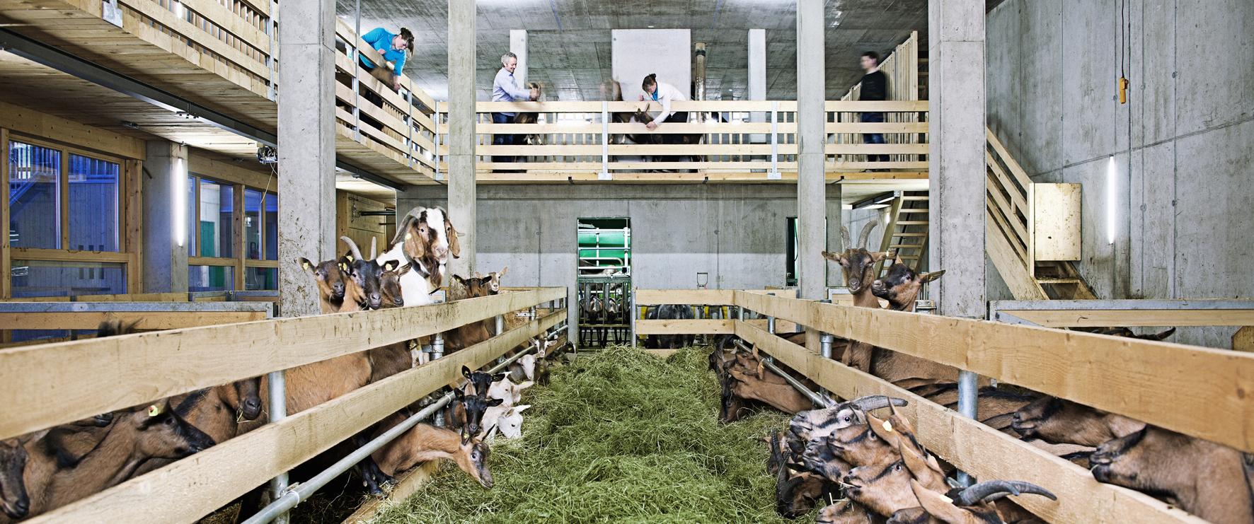 Naturhautnah.at hat sich der Erhaltung des ländlichen Lebensraumes und der Entwicklung hochwertiger regionaler Produkte verschrieben. Die Produktion und ihre traditionelle Verankerung in der Region werden den Gästen dabei über authentische Geschichten vermittelt