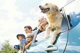 Hund Familie Auto Reisen