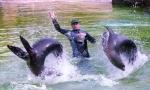 10 Kalifornische Seelöwen Lucie und Sandra_Copyright _Zoo Berlin__Mai 2013_