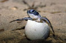 Schildkröte - Foto: WWF-Canon/Roger LeGuen